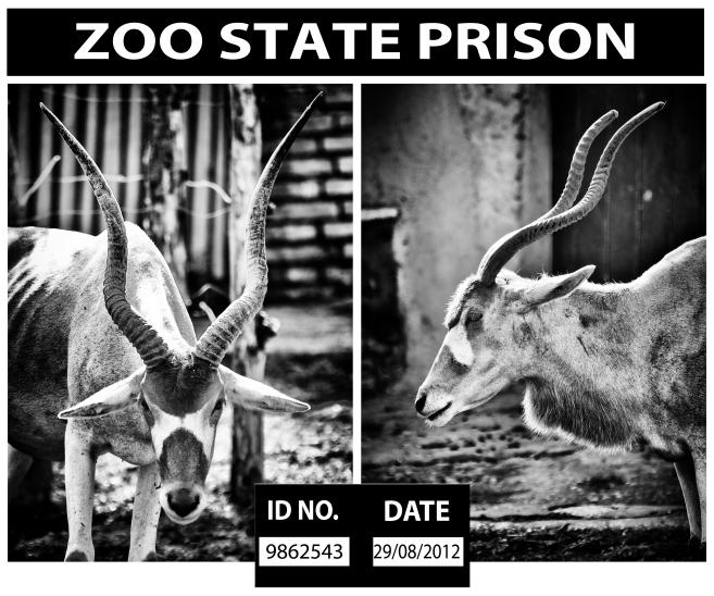 zoostateprison1